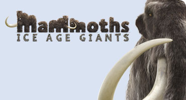 The monumental Mammoths: Ice Age Giants exhibition at the Natural History Museum