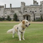 Dundas Castle's resident dogs welcomed VisitScotland's Ambassadog George to help with his tourism training