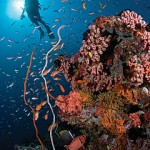 Explore the Unrivalled Underwater World of the Maldives with Four Seasons Resorts Maldives Dive Discovery Package