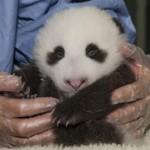 Photo taken on Sept. 20, 2012, by Tammy Spratt, San Diego Zoo Global