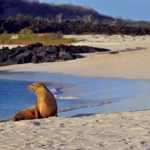 Silversea's Second Expedition Ship Will Set Sail as Silver Galapagos