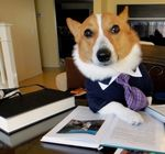 Marriott, A Dog Wearing a Tie Visits Boulder on a Business Trip and Expenses His Lottery Ticket?