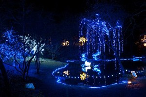 Hard Work Makes Holiday Lights at Garvan Woodland Gardens Happen