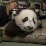 San Diego Zoo, Panda Cub Xiao Liwu, Barking Up a Tree