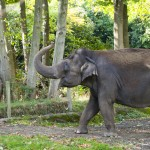 Statement on Elephant Care at Woodland Park Zoo
