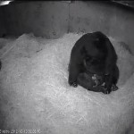 The Smithsonian's National Zoo, TWO ANDEAN BEAR CUBS BORN AT SMITHSONIAN'S NATIONAL ZOO