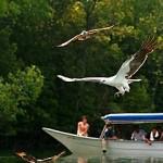 Mangroves and Eagles Safari