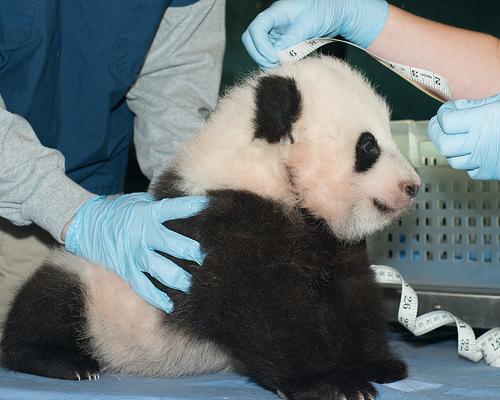 Photo: Abby Wood, Smithsonian's National Zoo