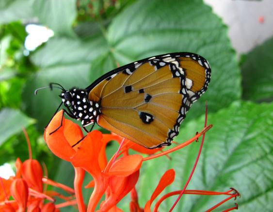 Calgary Zoo's Garden Gallery comes alive with the arrival of butterflies this spring