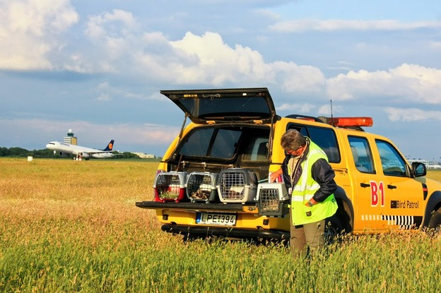 Budapest Airport's bird and wildlife protection specialists relocated 15 protected bird chicks to the safety of the Hortobágy National  Park