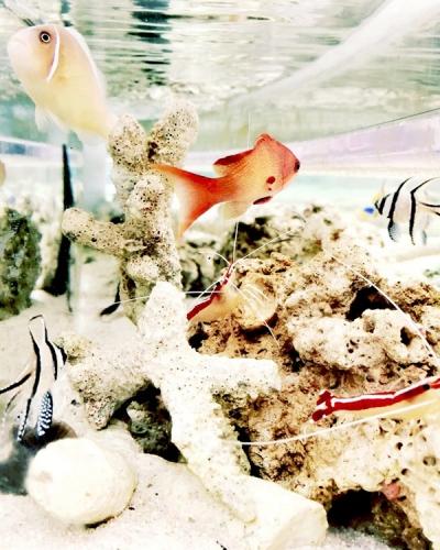 Four Seasons Resort The Biltmore Santa Barbara's Tydes Restaurant launches Coral Reef Aquarium Bar