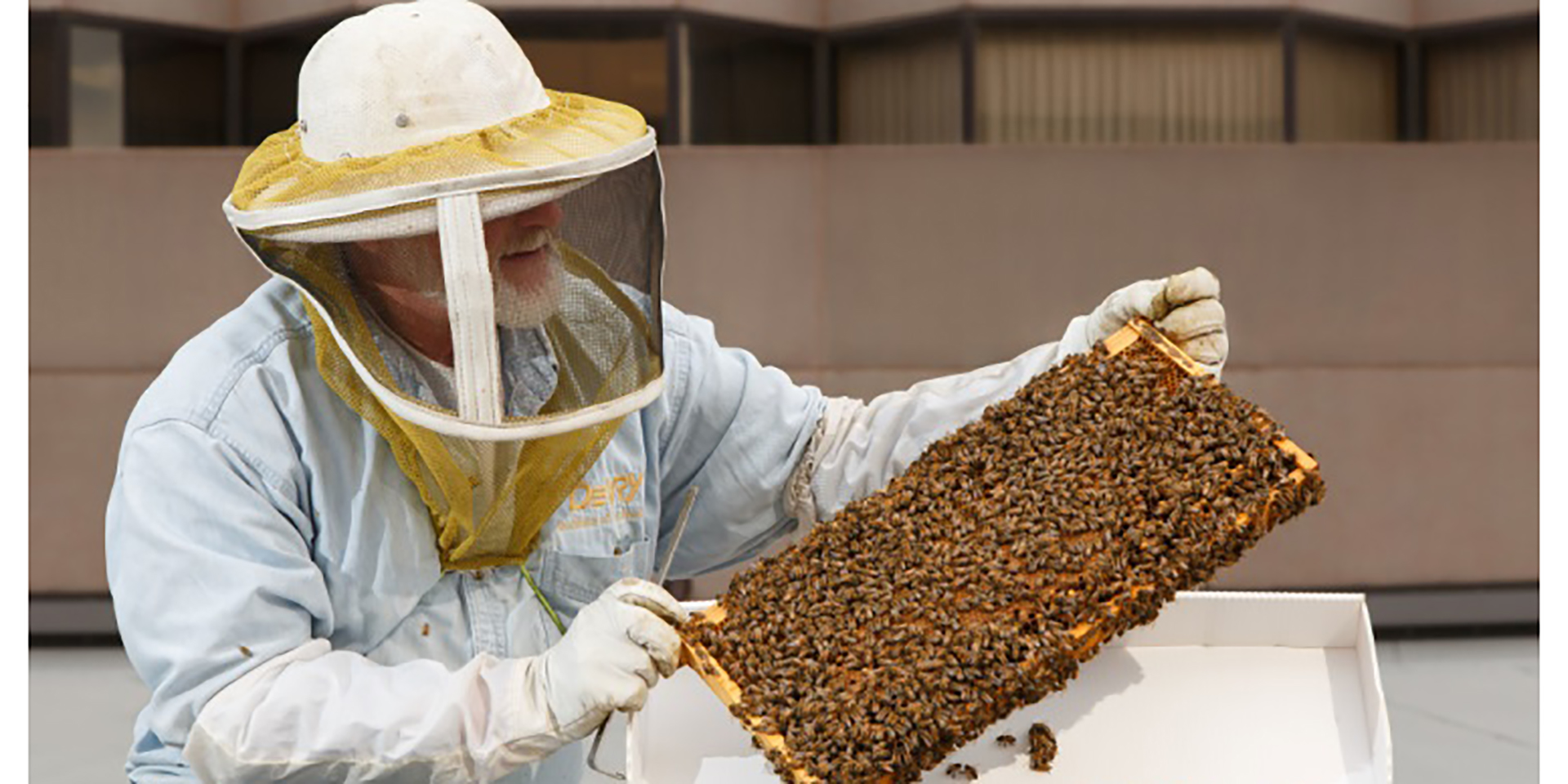 Ritz-Carlton Hotel contributes to global efforts to revive honeybee population by housing them in their properties