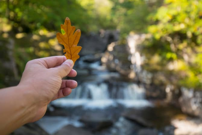 VisitScotland: plan your forest adventure with new e-book Autumn Adventures in Scotland