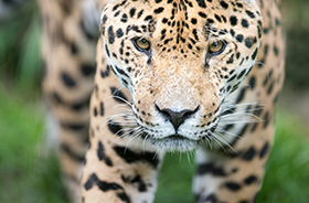 IATA unveils Airport Wildlife Trafficking Assessment Tool to help defeat smugglers of endangered species