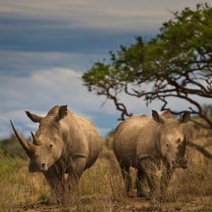 Travel PR News  Qatar Airways joins the United for Wildlife Transport ...