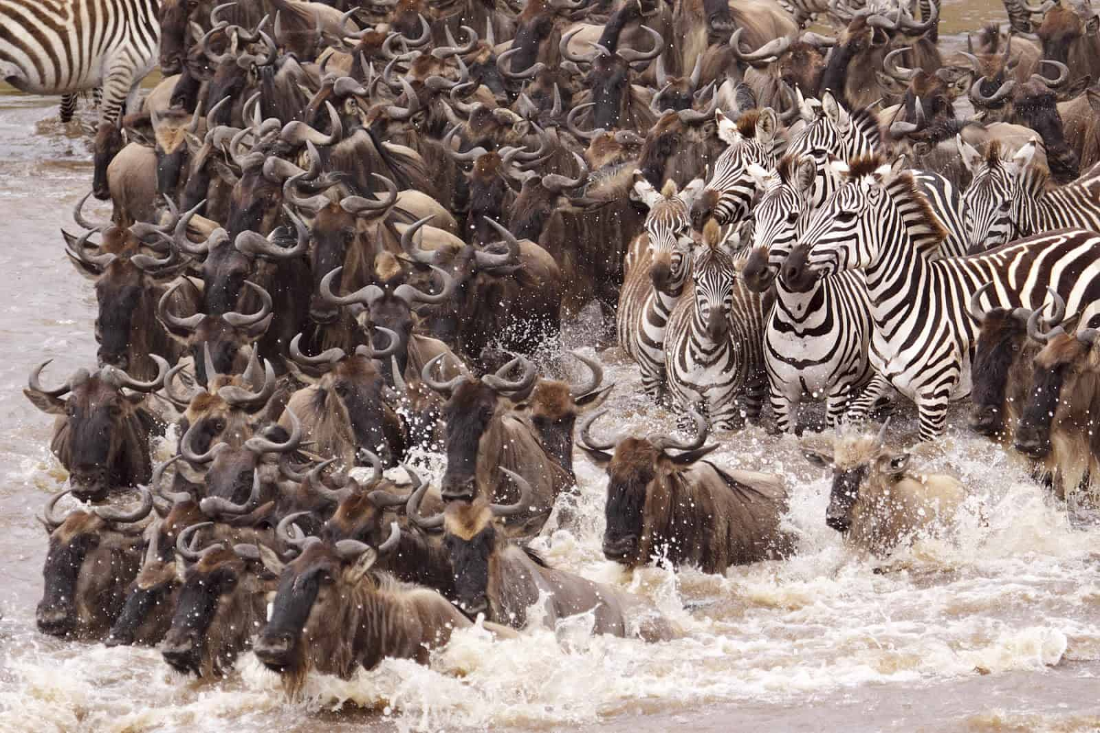 Currently accepting safari booking for wildebeest migration in Tanzania