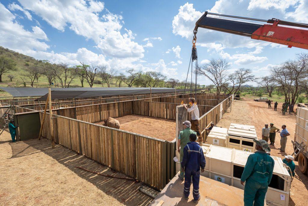 Black rhino Translocation